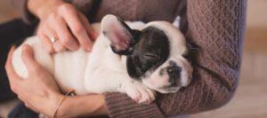 Puppy-sleeping